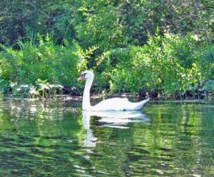 scary monster swan