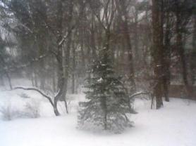 blizzard backyard view