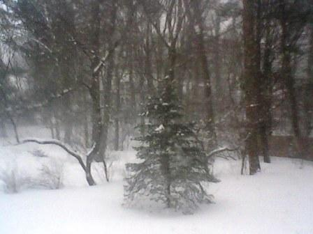 blizzard backyard view