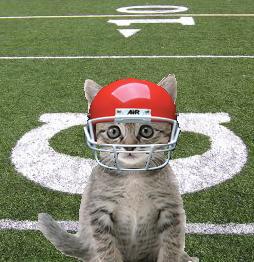 football kitten