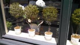 cambridge flower shop window