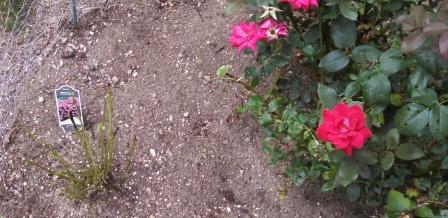 cone flower stalks