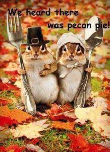 chipmunk thanksgiving