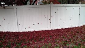 red leaves on white fence