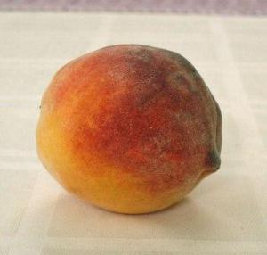 yummy peach