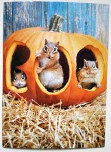 chipmunks in pumpkin