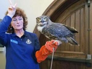 gigantic owl