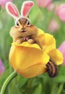 Easter c;hipmunk
